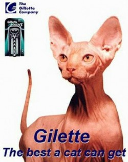 Gilette, the best a cat can get