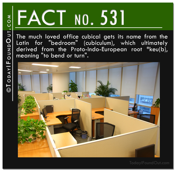 cubicle-fact