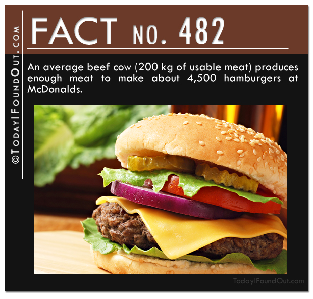 hamburger-fact
