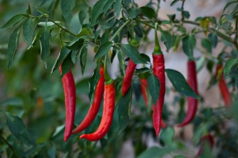 Cayenne_Pepper