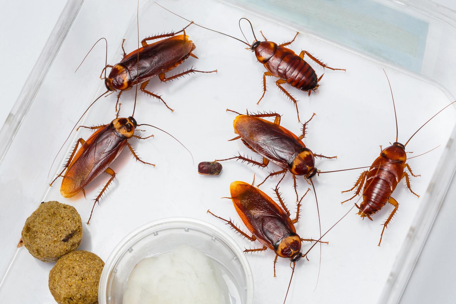 Roaches In Kitchen Sink Drain Besto Blog