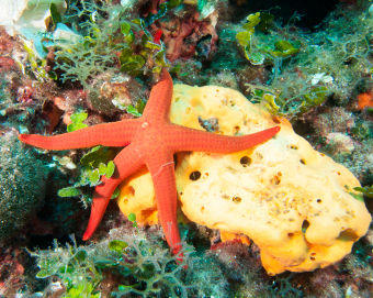 starfish-and-sponge