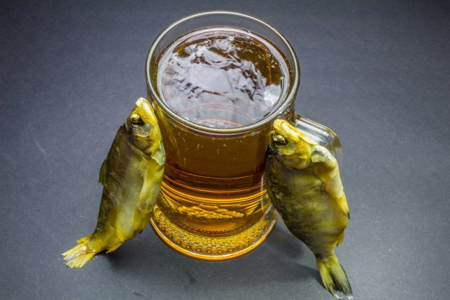 Can Fish Get Thirsty And Why Can T Freshwater Fish Live In Saltwater And Vice Versa