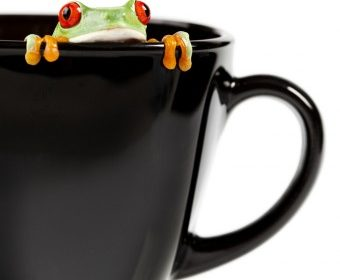 frog-cup-340x509