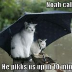 funny-pictures-cats-umbrella-rain-f2